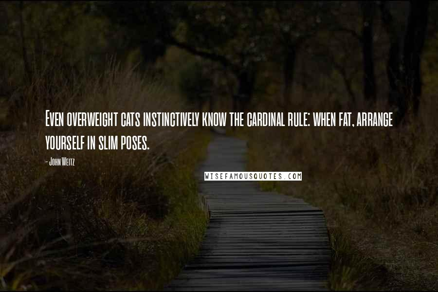 John Weitz quotes: Even overweight cats instinctively know the cardinal rule: when fat, arrange yourself in slim poses.