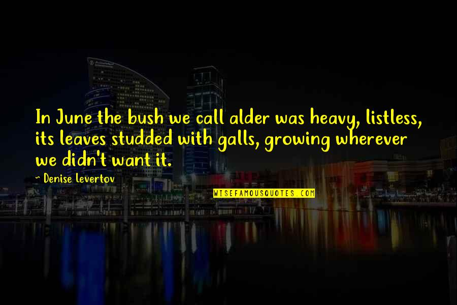 June's Quotes By Denise Levertov: In June the bush we call alder was