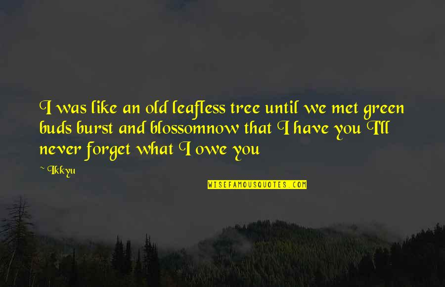 Just Met You And I Like You Quotes By Ikkyu: I was like an old leafless tree until