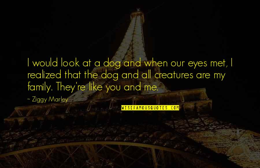 Just Met You And I Like You Quotes By Ziggy Marley: I would look at a dog and when