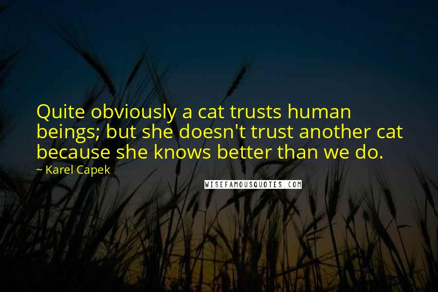 Karel Capek quotes: Quite obviously a cat trusts human beings; but she doesn't trust another cat because she knows better than we do.