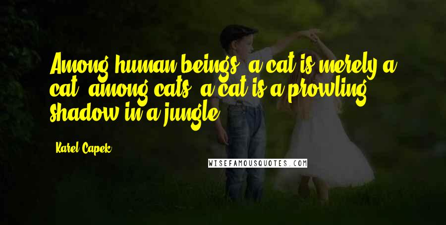 Karel Capek quotes: Among human beings, a cat is merely a cat; among cats, a cat is a prowling shadow in a jungle.