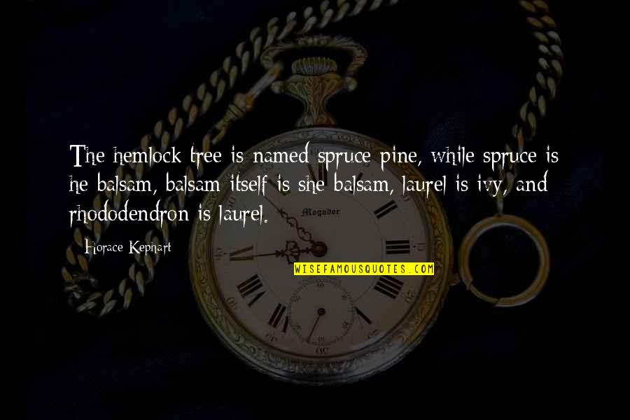 Kephart Quotes By Horace Kephart: The hemlock tree is named spruce-pine, while spruce