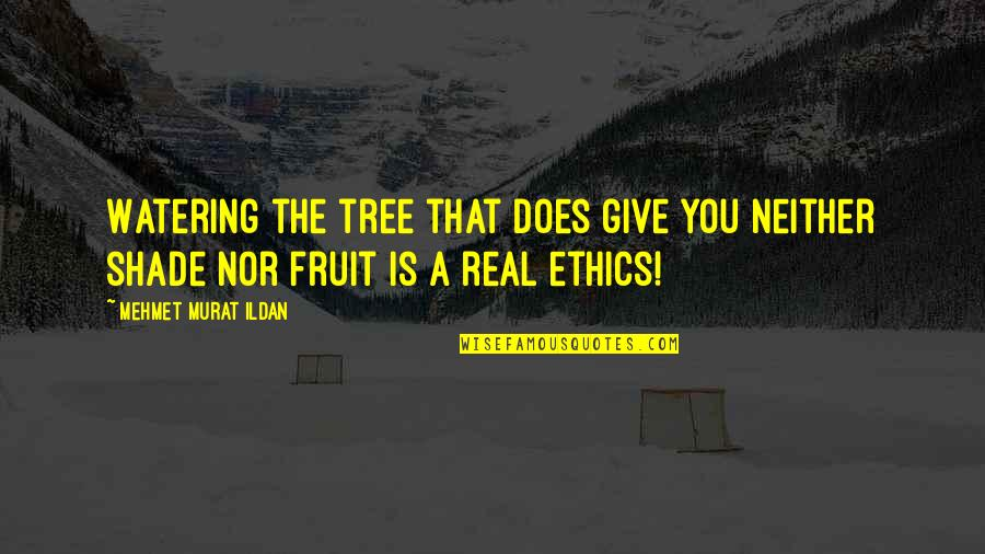 Kierkgaard Quotes By Mehmet Murat Ildan: Watering the tree that does give you neither