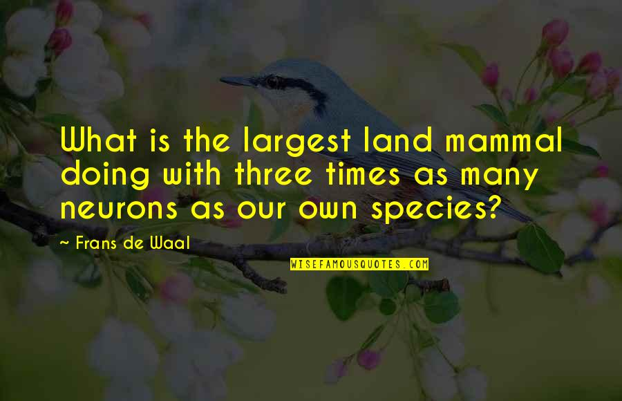 Largest Quotes By Frans De Waal: What is the largest land mammal doing with