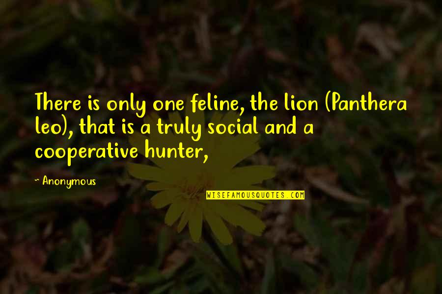 Leo The Lion Quotes By Anonymous: There is only one feline, the lion (Panthera
