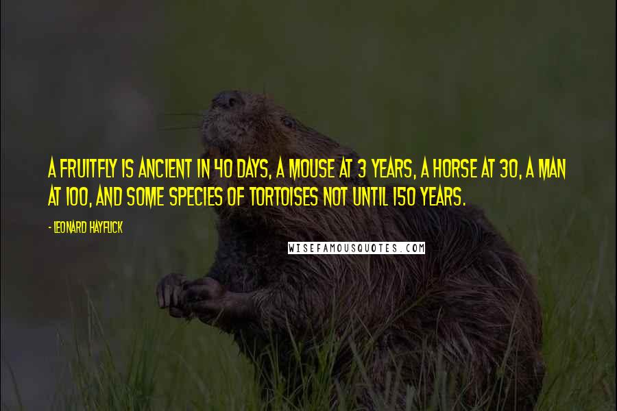 Leonard Hayflick quotes: A fruitfly is ancient in 40 days, a mouse at 3 years, a horse at 30, a man at 100, and some species of tortoises not until 150 years.