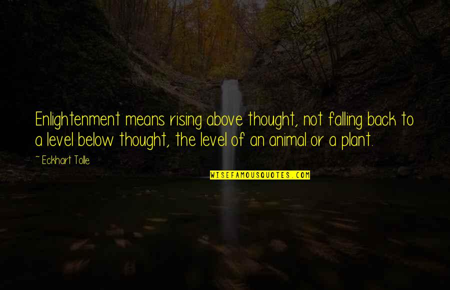 Lexie Grey I Love You Quotes By Eckhart Tolle: Enlightenment means rising above thought, not falling back