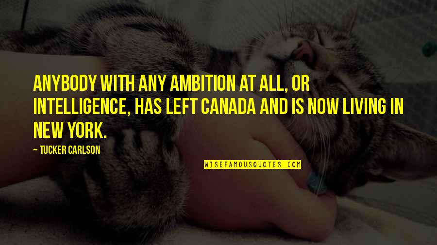 Living Now Quotes By Tucker Carlson: Anybody with any ambition at all, or intelligence,