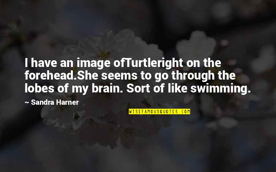 Lobes Quotes By Sandra Harner: I have an image ofTurtleright on the forehead.She