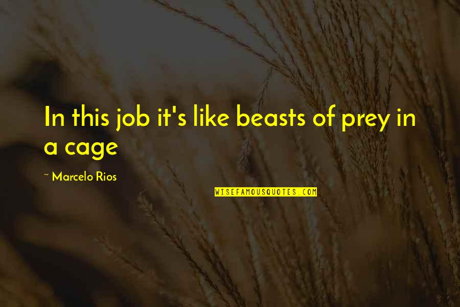Lost Love Death Quotes By Marcelo Rios: In this job it's like beasts of prey