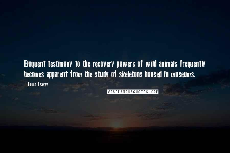 Louis Leakey quotes: Eloquent testimony to the recovery powers of wild animals frequently becomes apparent from the study of skeletons housed in museums.