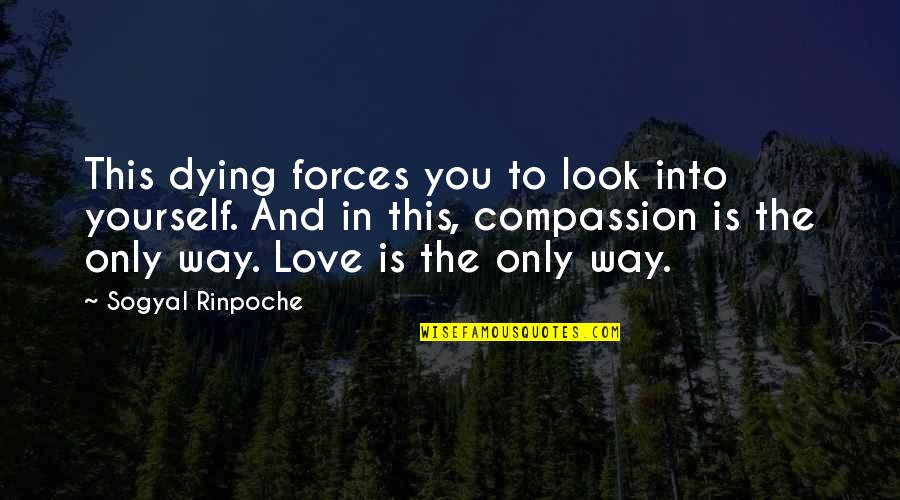 Lovers Quotations Quotes By Sogyal Rinpoche: This dying forces you to look into yourself.