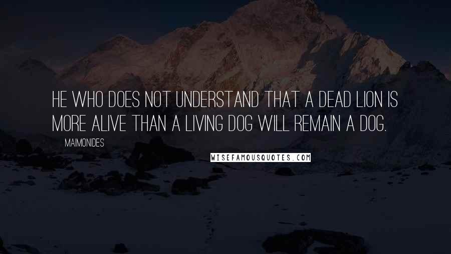 Maimonides quotes: He who does not understand that a dead lion is more alive than a living dog will remain a dog.