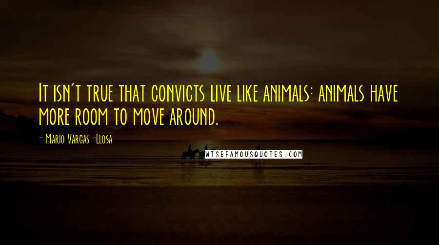 Mario Vargas-Llosa quotes: It isn't true that convicts live like animals: animals have more room to move around.