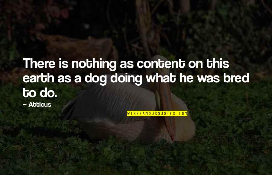 May Namimiss Quotes By Atticus: There is nothing as content on this earth