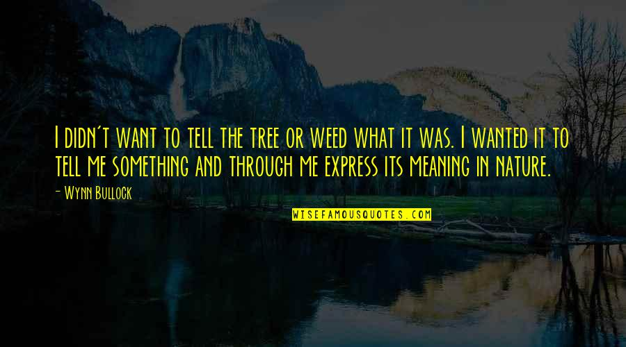 Meaning Something Quotes By Wynn Bullock: I didn't want to tell the tree or