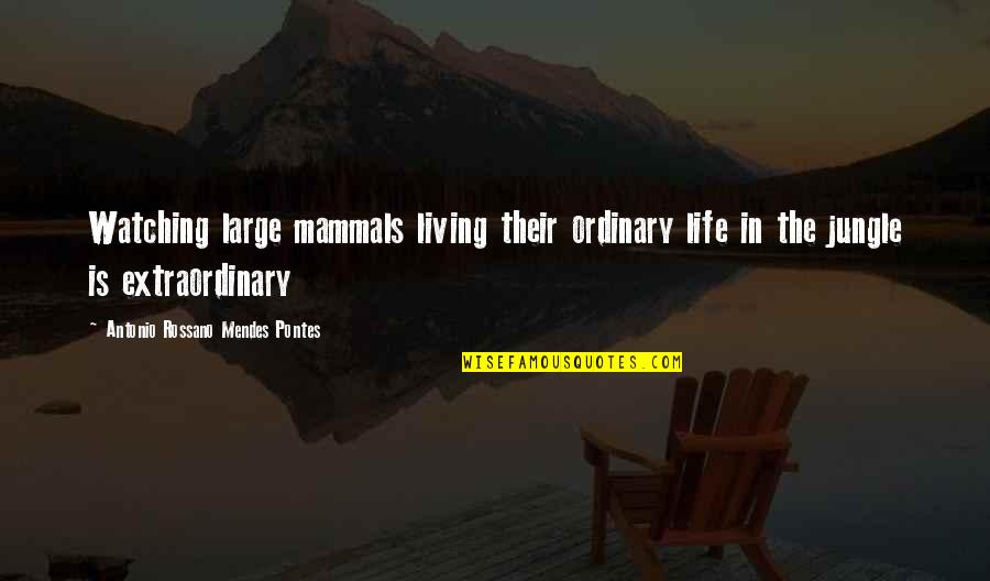 Mendes Quotes By Antonio Rossano Mendes Pontes: Watching large mammals living their ordinary life in