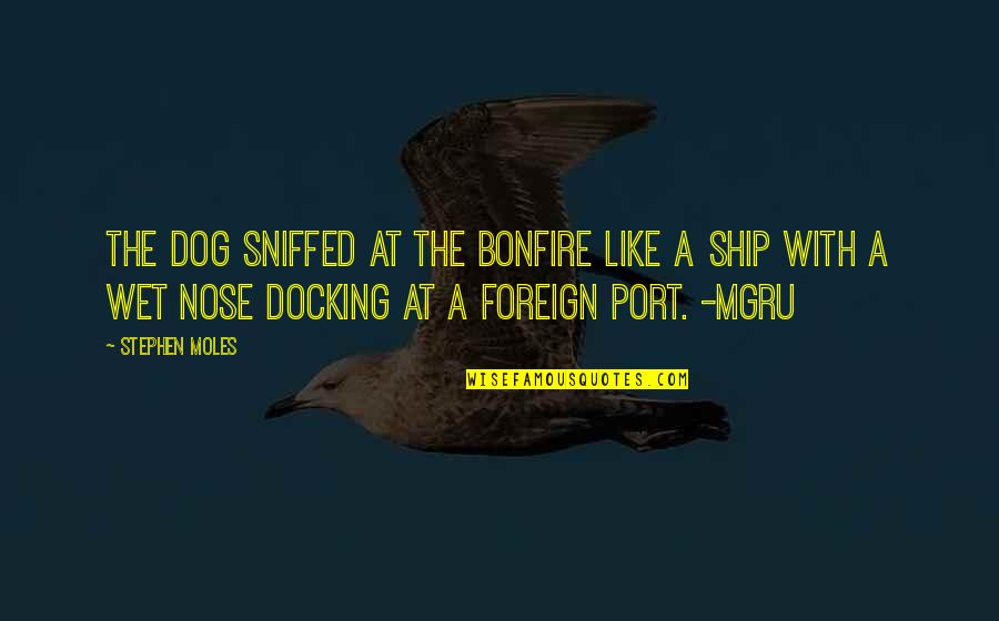 Mgru Quotes By Stephen Moles: The dog sniffed at the bonfire like a