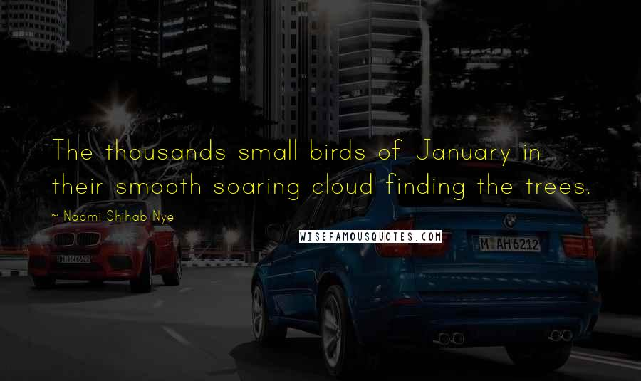 Naomi Shihab Nye quotes: The thousands small birds of January in their smooth soaring cloud finding the trees.
