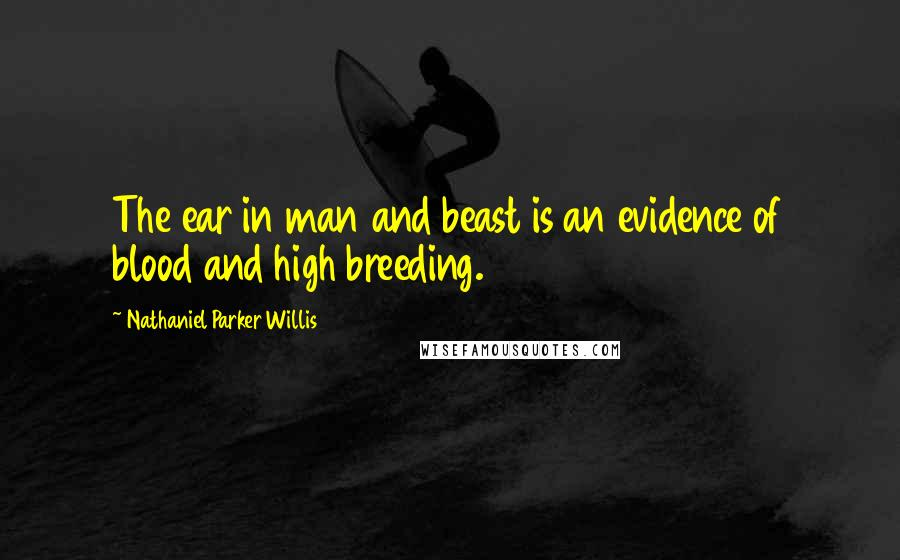 Nathaniel Parker Willis quotes: The ear in man and beast is an evidence of blood and high breeding.