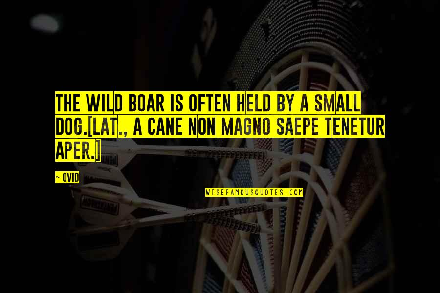 Nature And Hunting Quotes By Ovid: The wild boar is often held by a