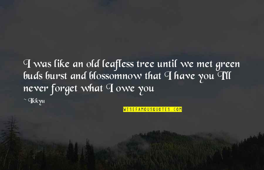 Never Forget You Quotes By Ikkyu: I was like an old leafless tree until