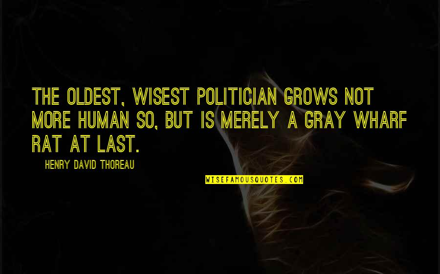 No Rats Quotes By Henry David Thoreau: The oldest, wisest politician grows not more human