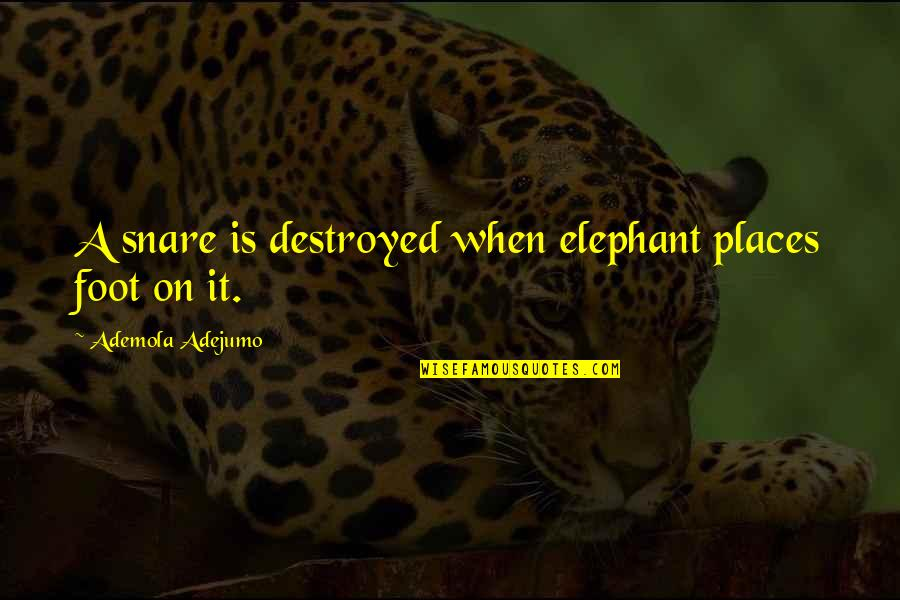 Nobody Can Go Back Quotes By Ademola Adejumo: A snare is destroyed when elephant places foot