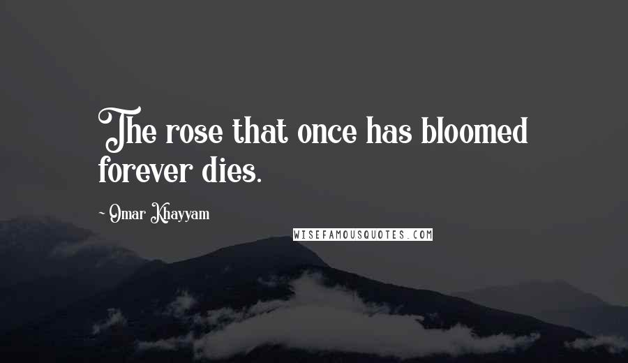 Omar Khayyam quotes: The rose that once has bloomed forever dies.