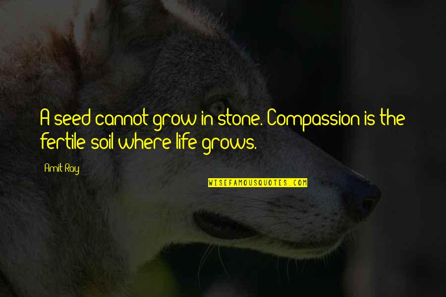 Outlook In Life Quotes By Amit Ray: A seed cannot grow in stone. Compassion is