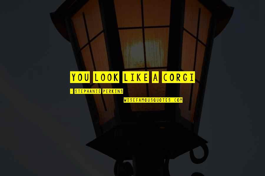 Perkins Quotes By Stephanie Perkins: You look like a corgi