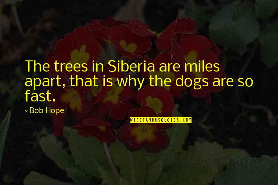 Pet Dogs Quotes By Bob Hope: The trees in Siberia are miles apart, that