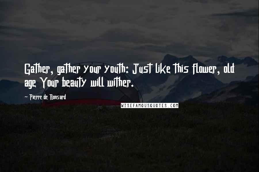 Pierre De Ronsard quotes: Gather, gather your youth: Just like this flower, old age Your beauty will wither.