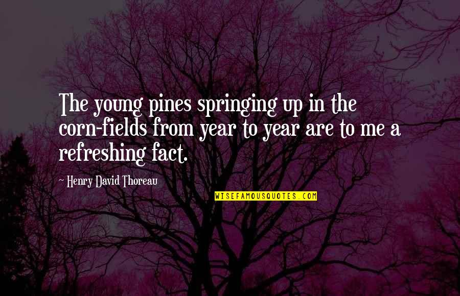 Pines Quotes By Henry David Thoreau: The young pines springing up in the corn-fields