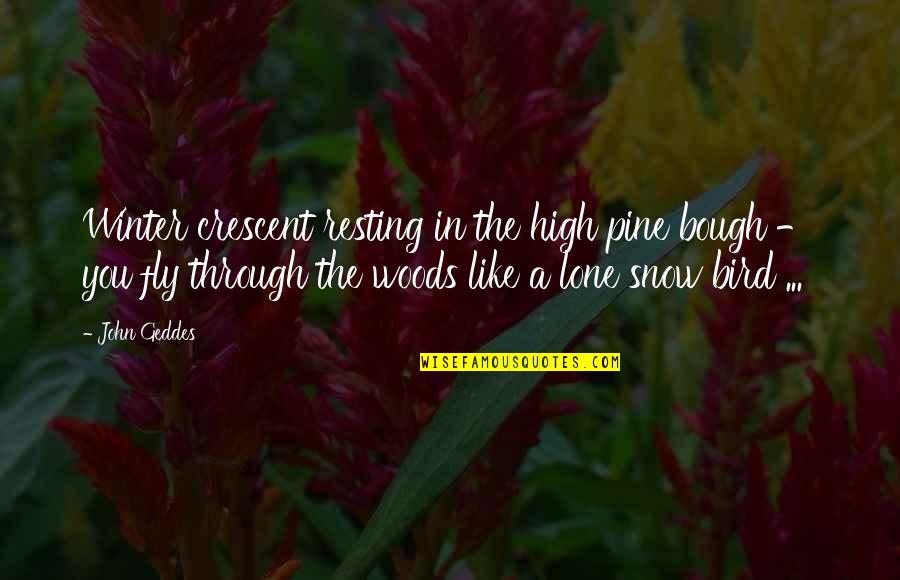 Pines Quotes By John Geddes: Winter crescent resting in the high pine bough