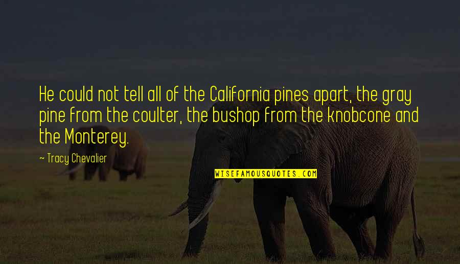 Pines Quotes By Tracy Chevalier: He could not tell all of the California