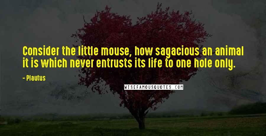 Plautus quotes: Consider the little mouse, how sagacious an animal it is which never entrusts its life to one hole only.