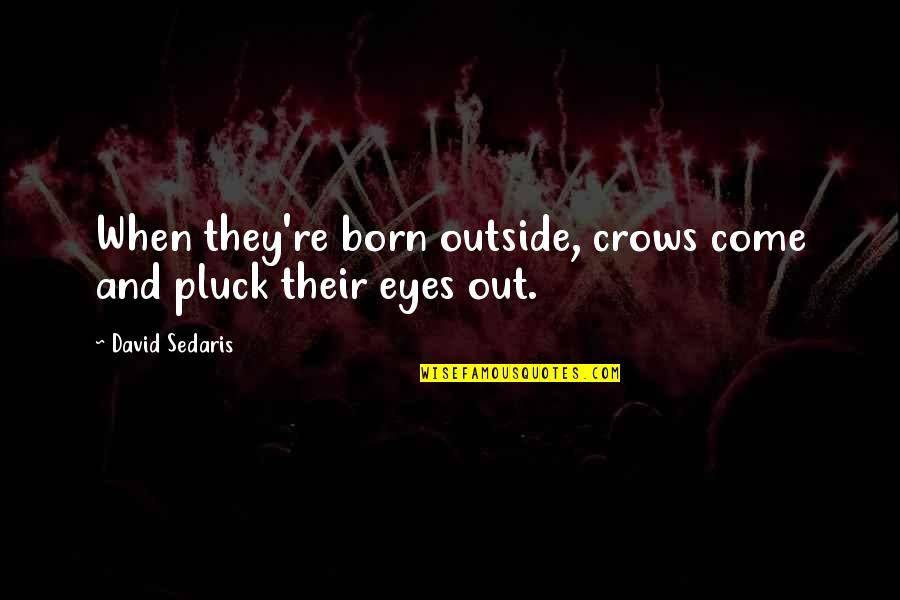 Pluck'd Quotes By David Sedaris: When they're born outside, crows come and pluck