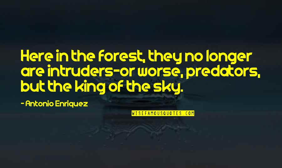 Potable Water Quotes By Antonio Enriquez: Here in the forest, they no longer are