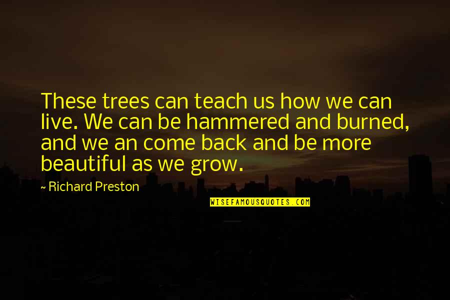 Preston And Steve Quotes By Richard Preston: These trees can teach us how we can