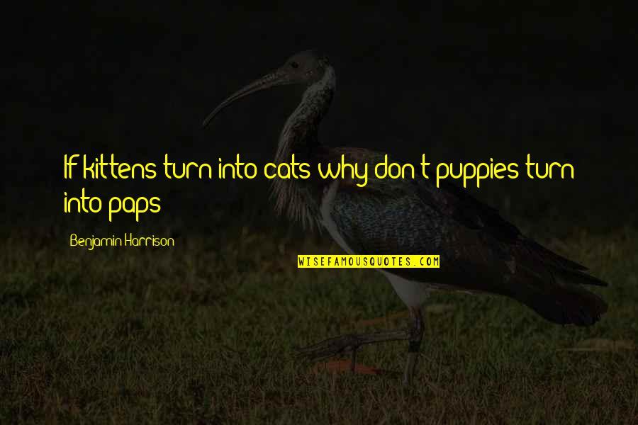 Puppies Quotes By Benjamin Harrison: If kittens turn into cats why don't puppies