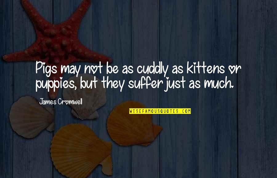 Puppies Quotes By James Cromwell: Pigs may not be as cuddly as kittens
