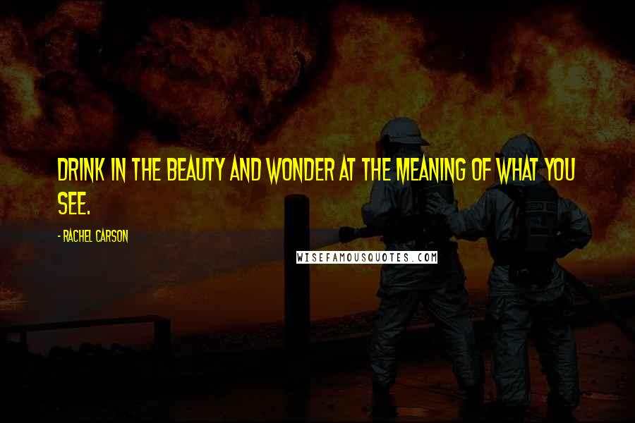 Rachel Carson quotes: Drink in the beauty and wonder at the meaning of what you see.