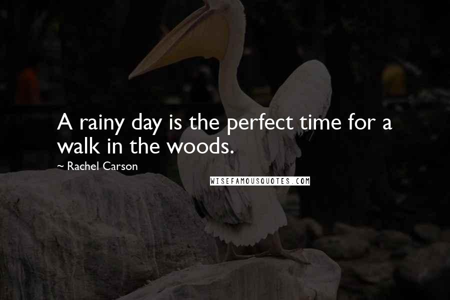 Rachel Carson quotes: A rainy day is the perfect time for a walk in the woods.