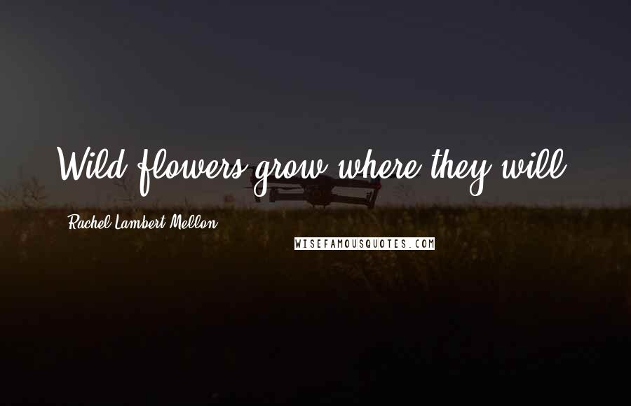 Rachel Lambert Mellon quotes: Wild flowers grow where they will.