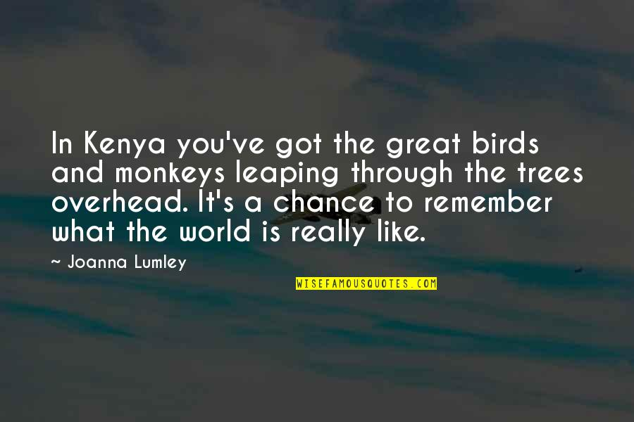 Rachel Phantomhive Quotes By Joanna Lumley: In Kenya you've got the great birds and