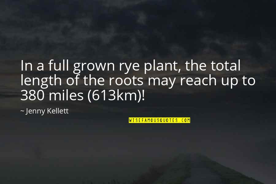 Reach Up Quotes By Jenny Kellett: In a full grown rye plant, the total