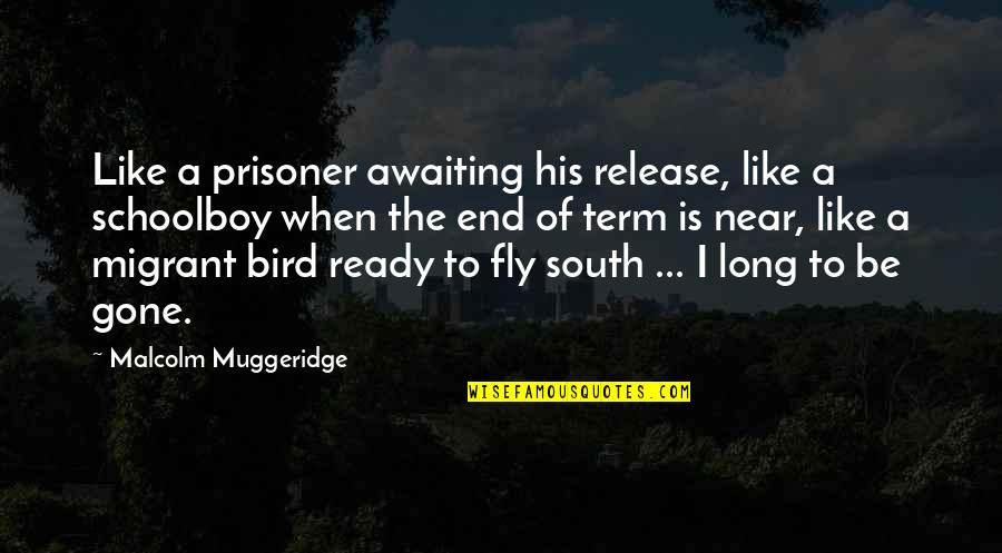 Ready Like Quotes By Malcolm Muggeridge: Like a prisoner awaiting his release, like a