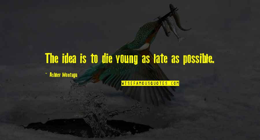 Respondents Quotes By Ashley Montagu: The idea is to die young as late